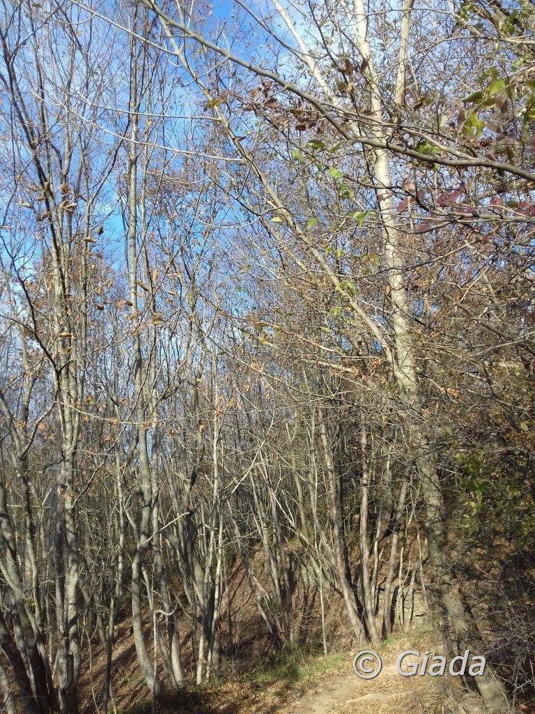 Sul sentiero nel bosco
