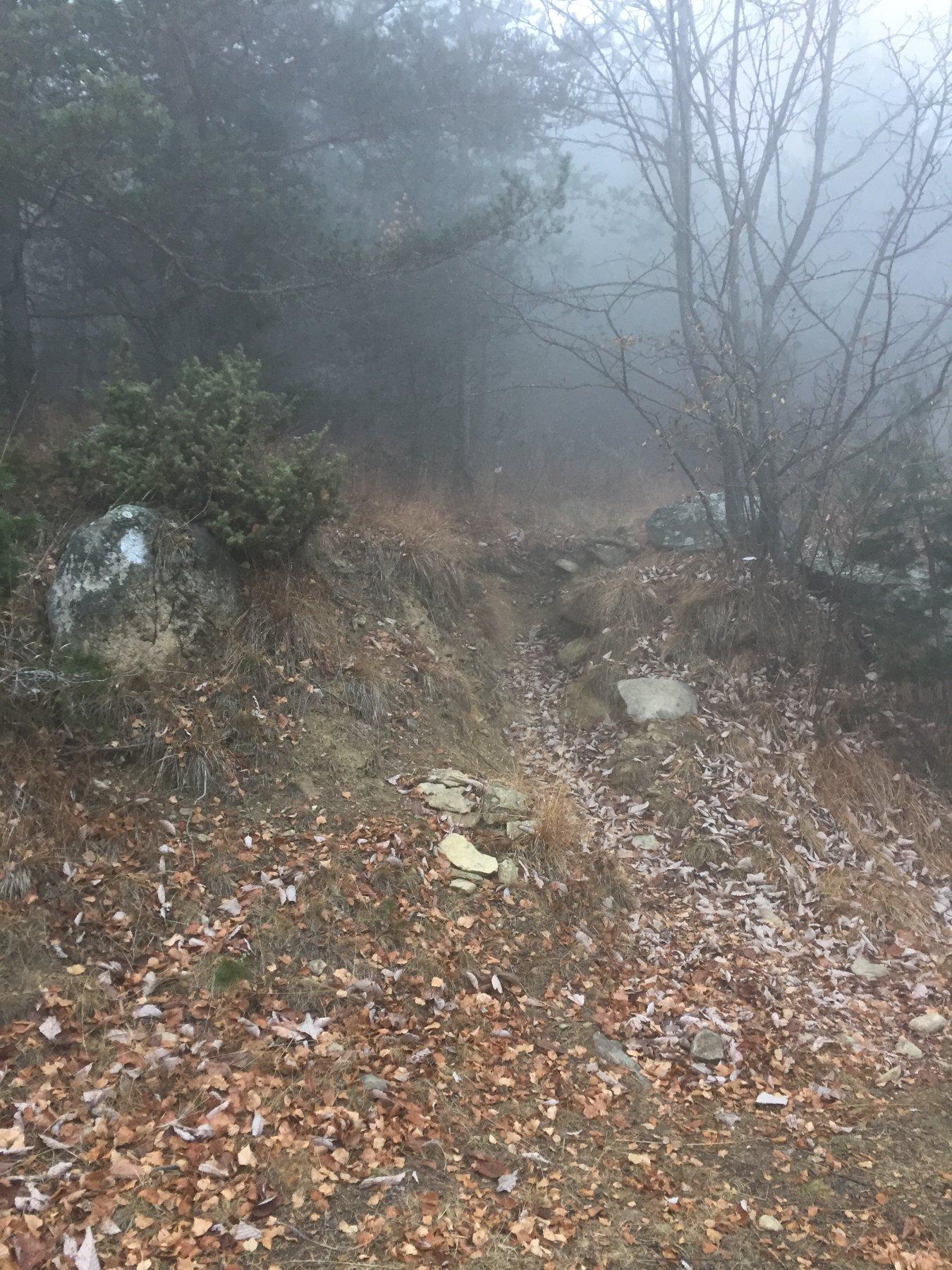 L'attacco del sentiero per il Colle della Bassa