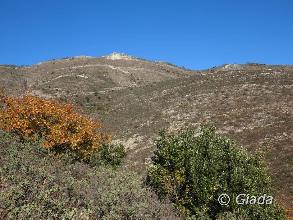 Salendo al Pesalto uno sguardo verso il crinale del Monte Acuto