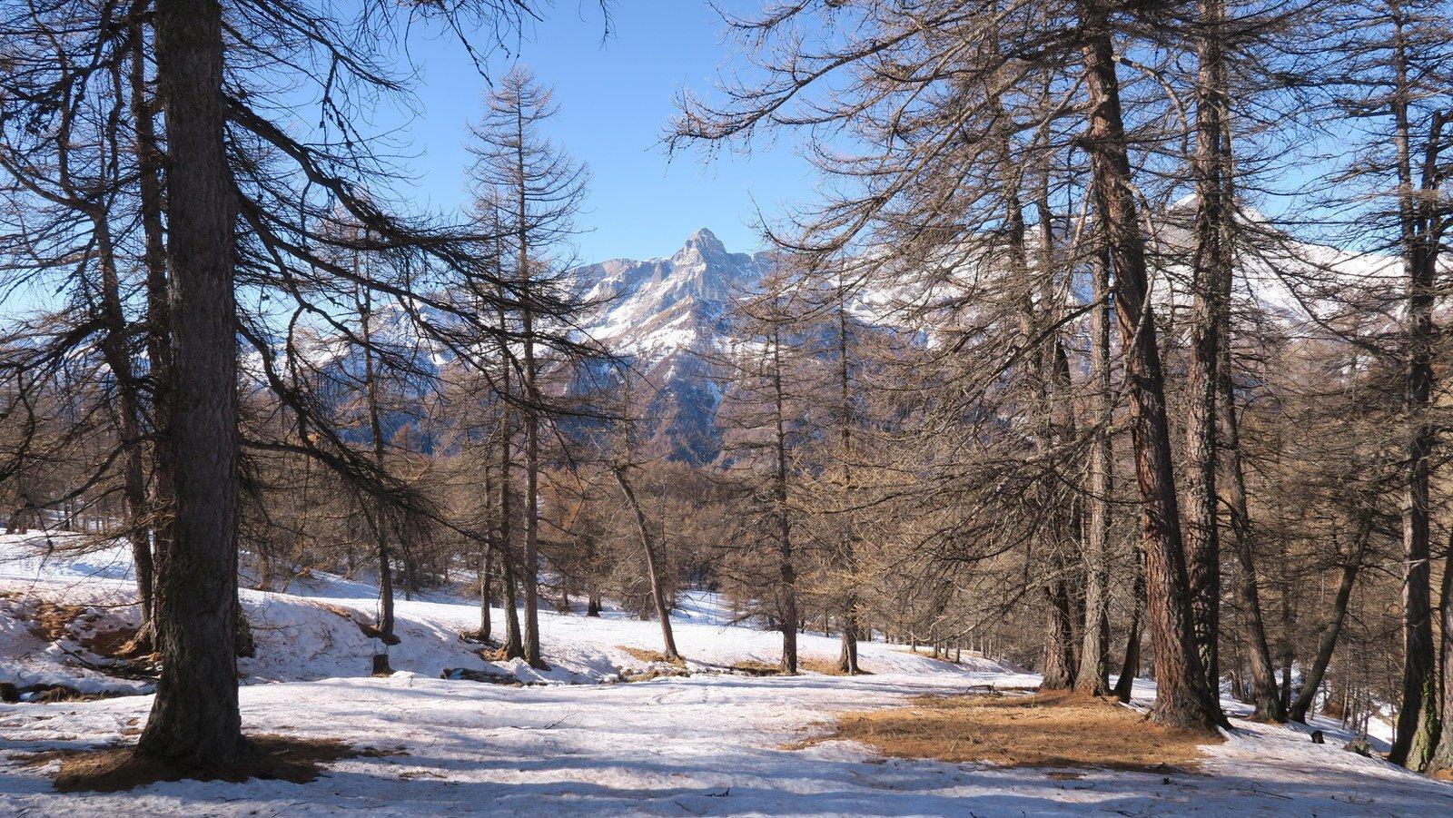 Bosco rado con neve sufficiente
