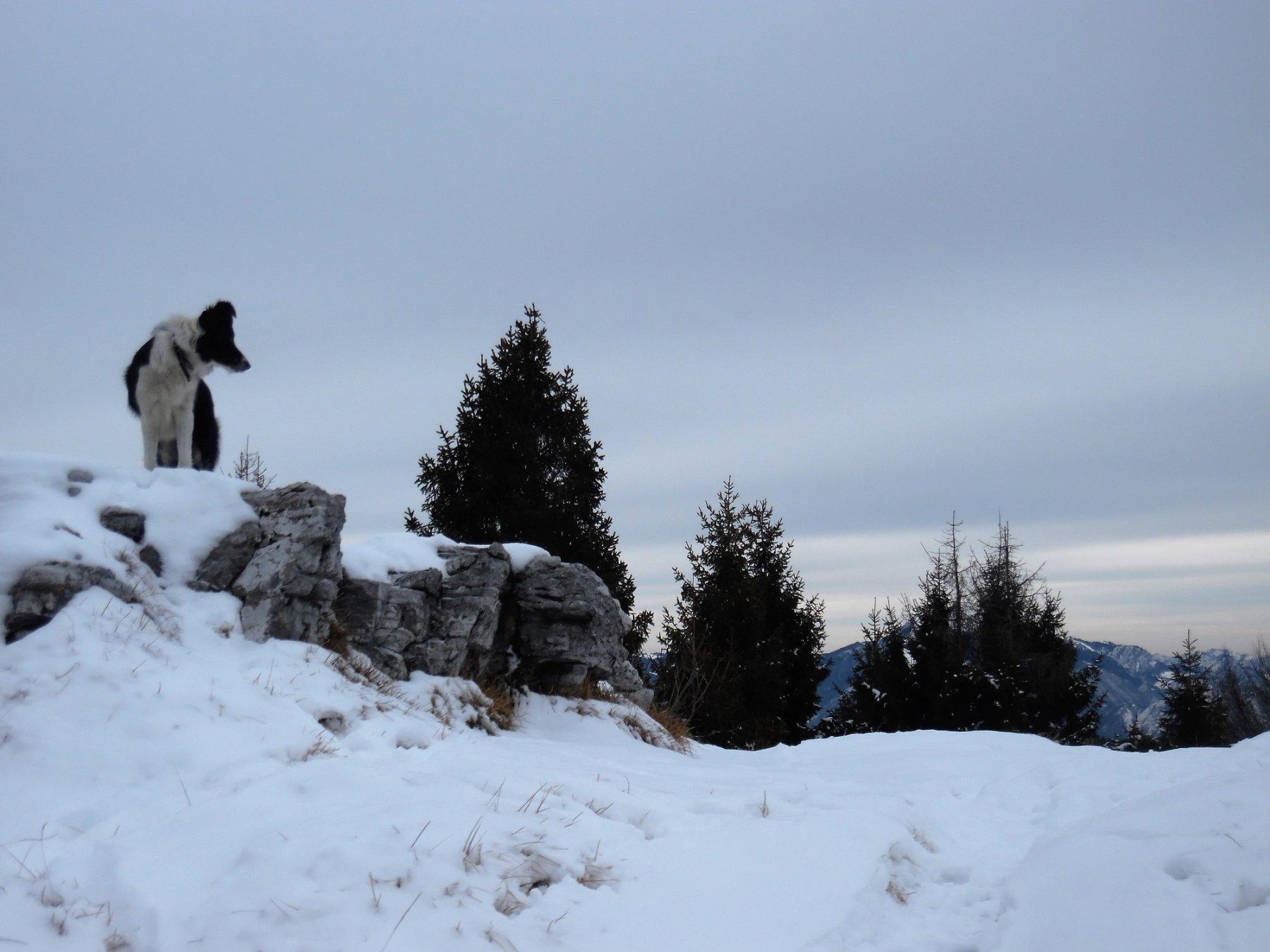Monte Fogarolo 1529 m