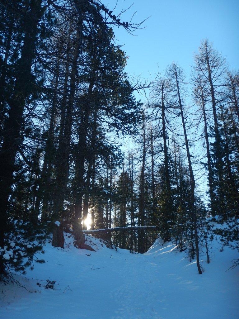 Nel bosco lasciate le piste