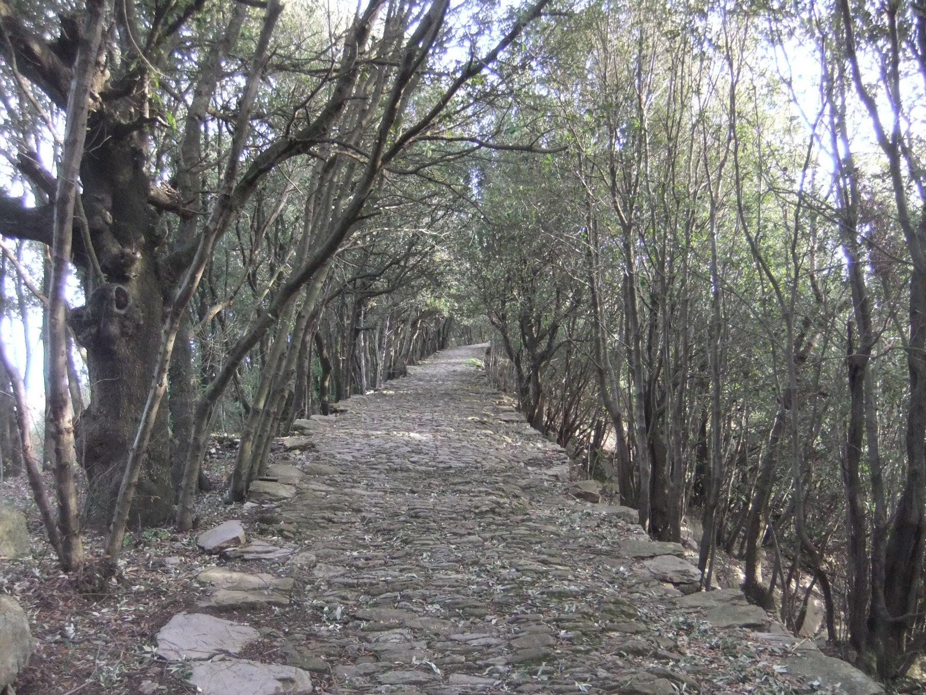 La bella stradona acciottolata verso il Santuario di Montallegro