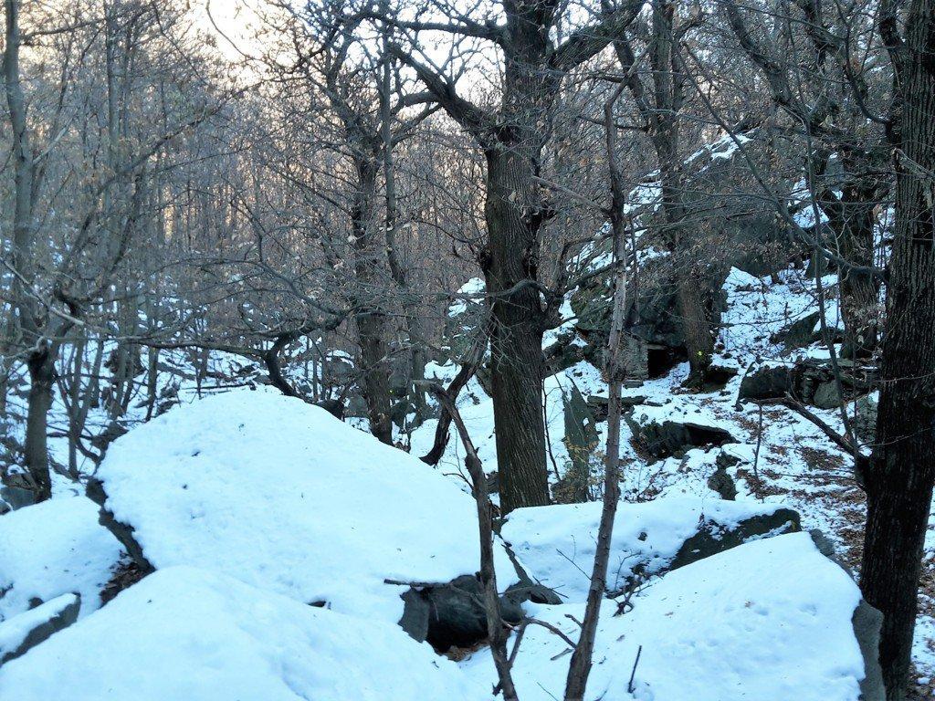 rientro dal sentiero nel bosco