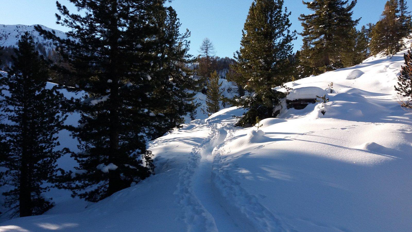 Bella neve e bella traccia