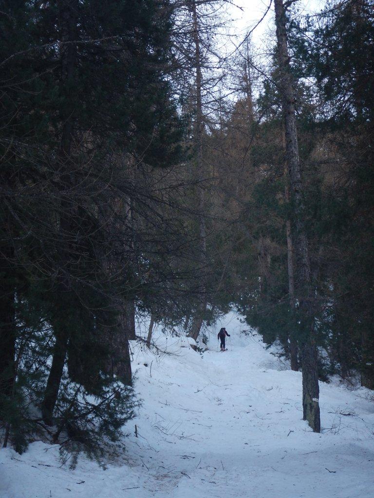 Partenza nel bosco