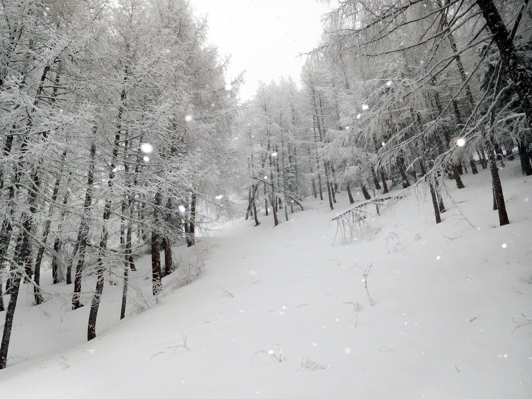 bosco incantevole