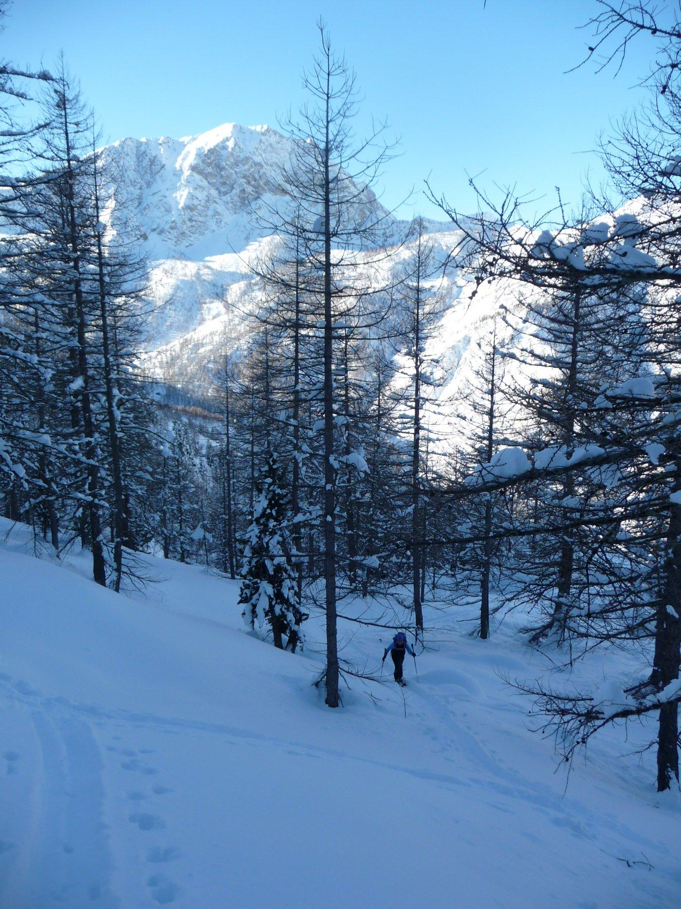 Bosco della Cialancette