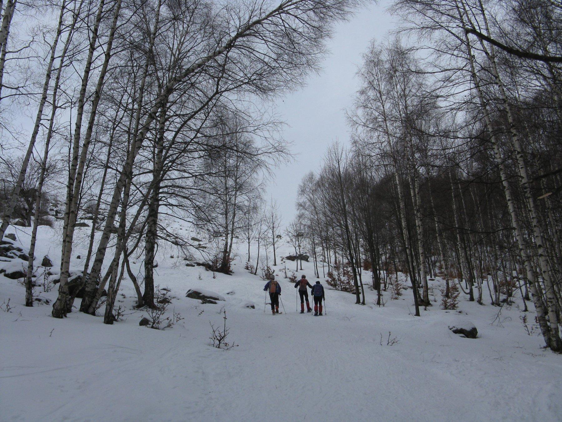 in uscita dal bosco