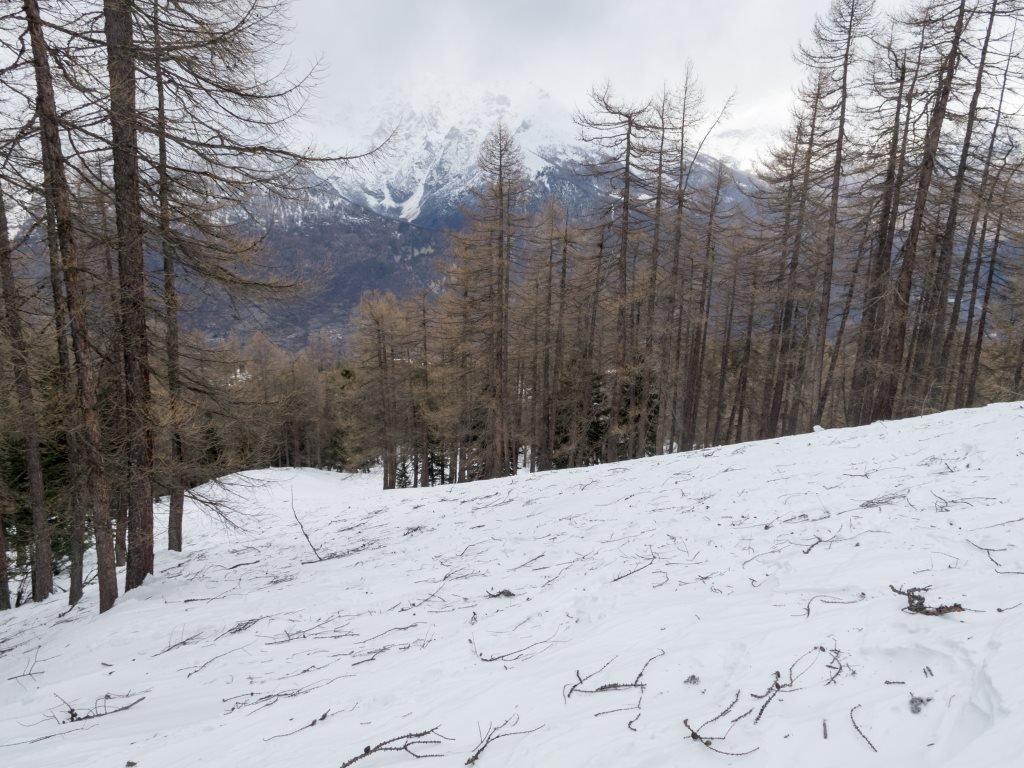 Si scia su neve dura e ramaglie...