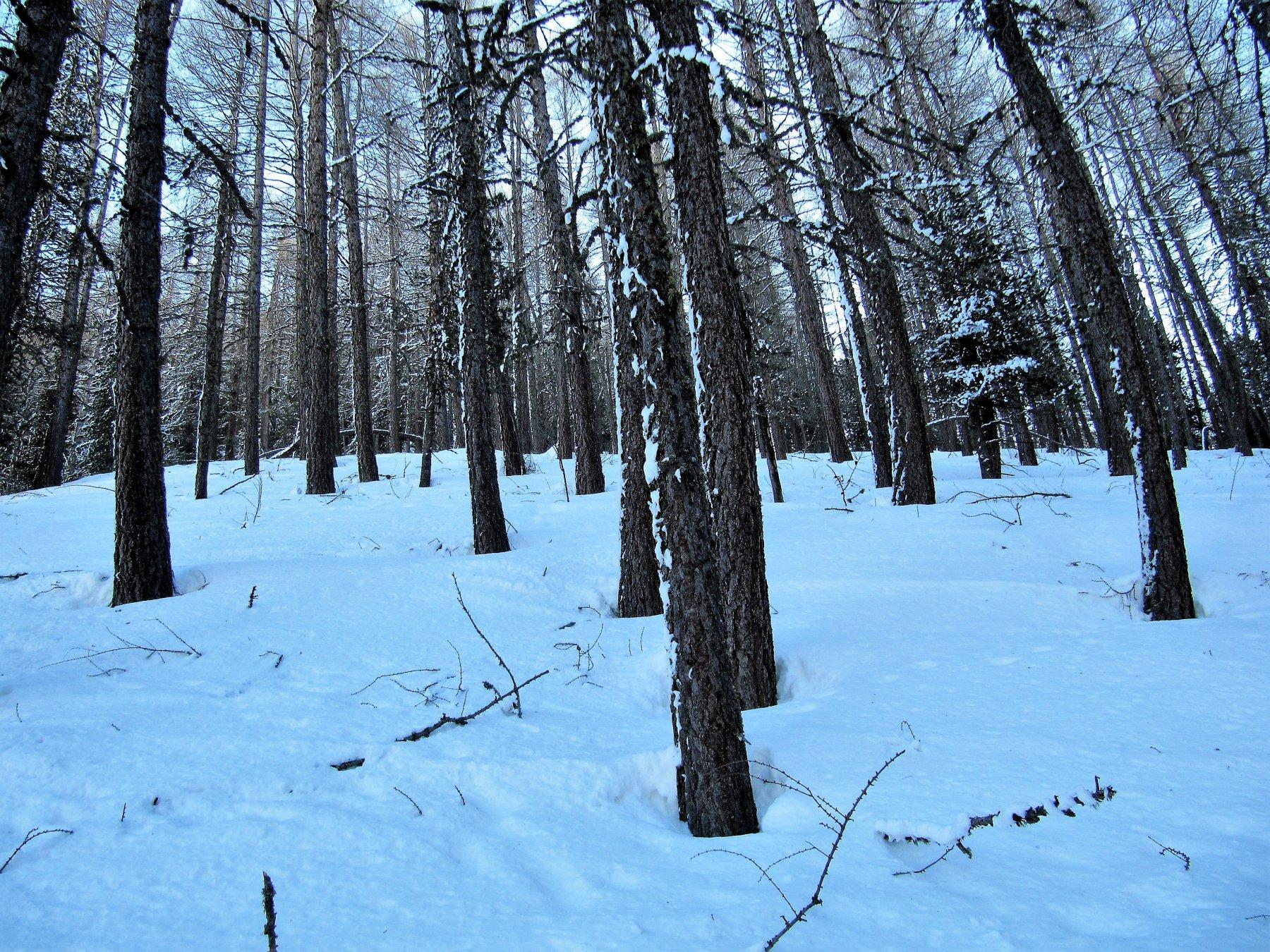 Condizioni bosco prima parte