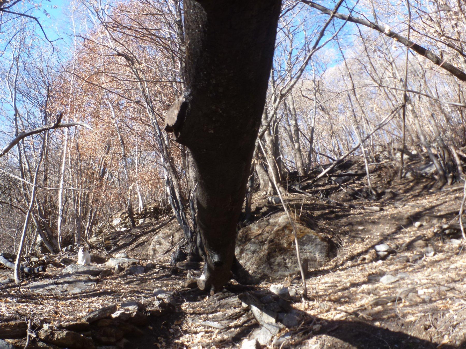 tronco bruciato