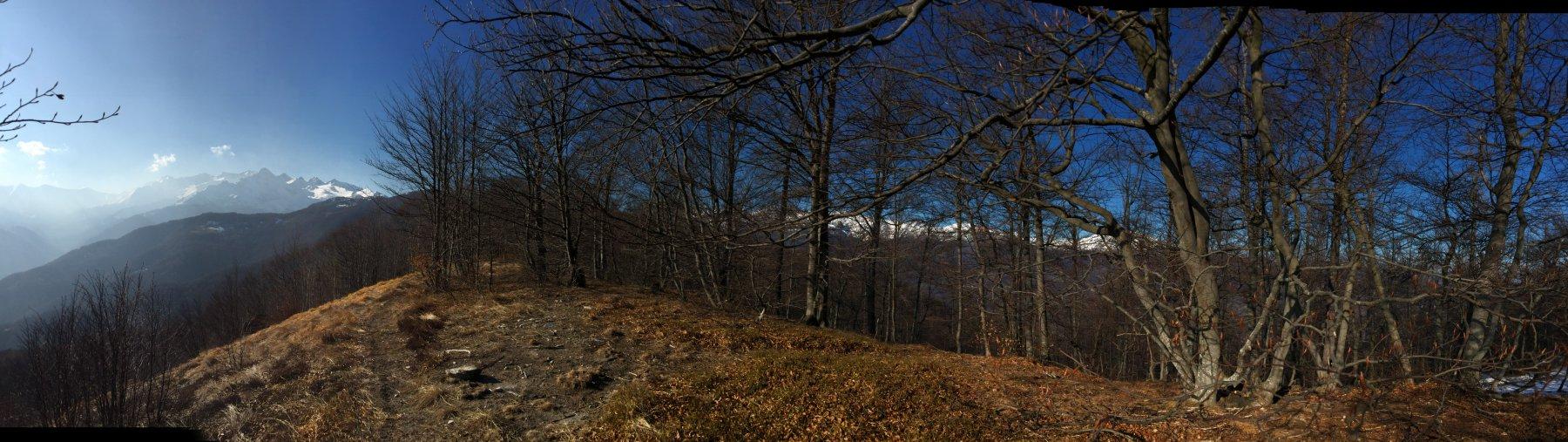 Vette innevate dalla Cristalliera al Rocciamelone spuntano fra gli alberi