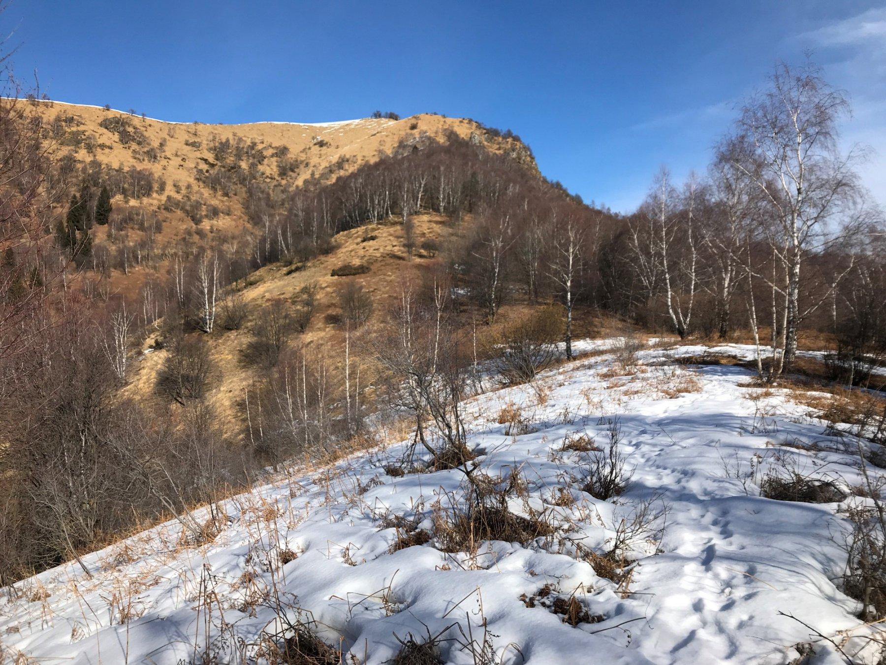 Usciti dal bosco si inizia a salire verso la cima del Camossaro