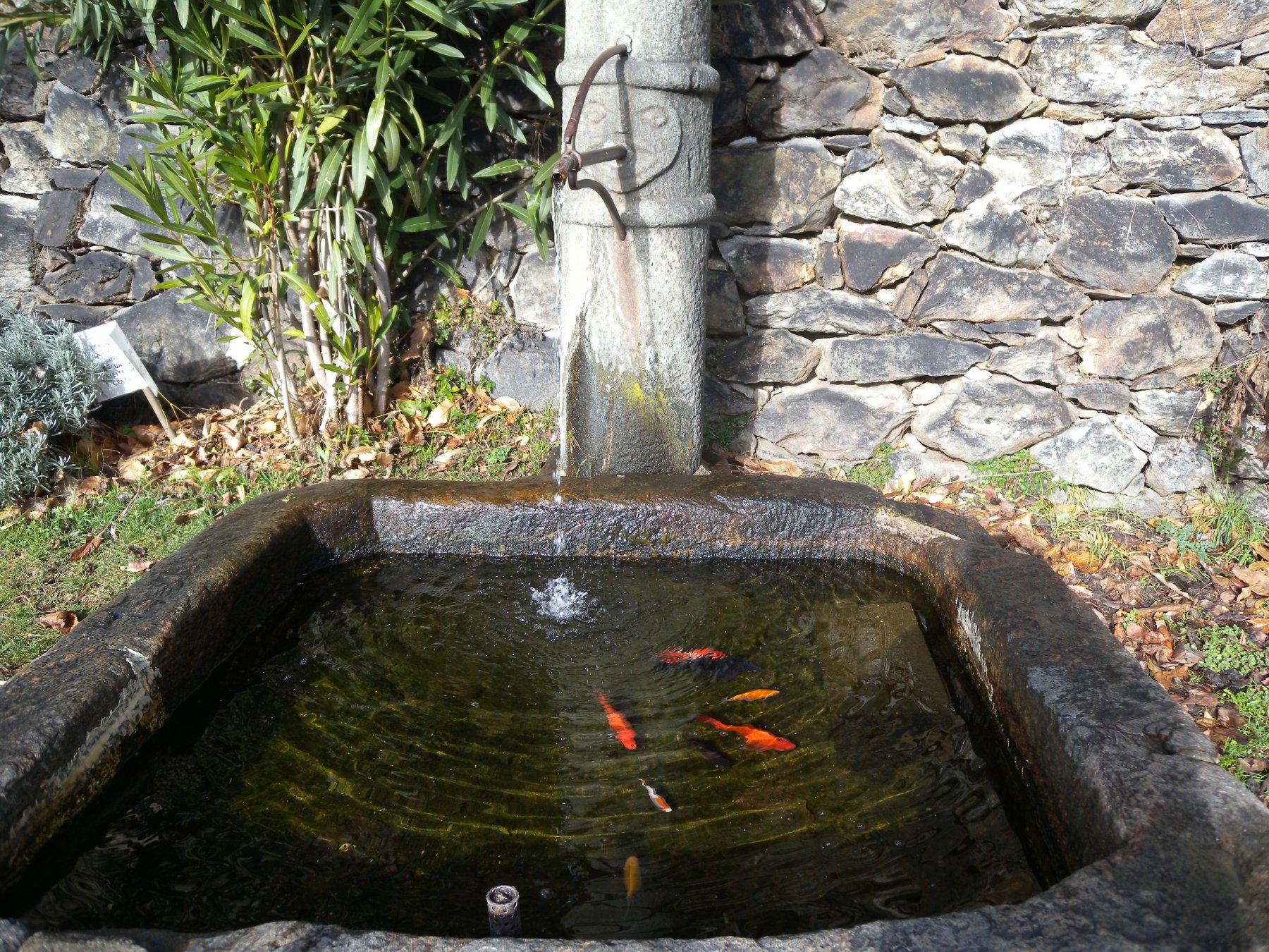 Fontana con pesciolini a Notre Dame de La Garde