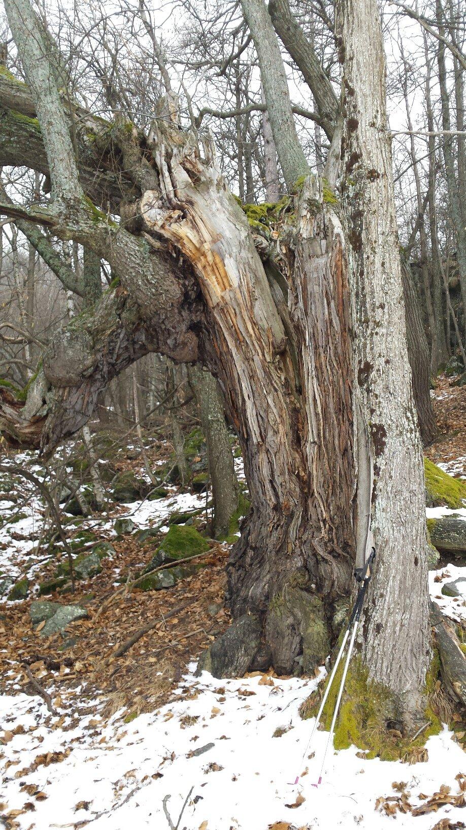 alberi...particolari...