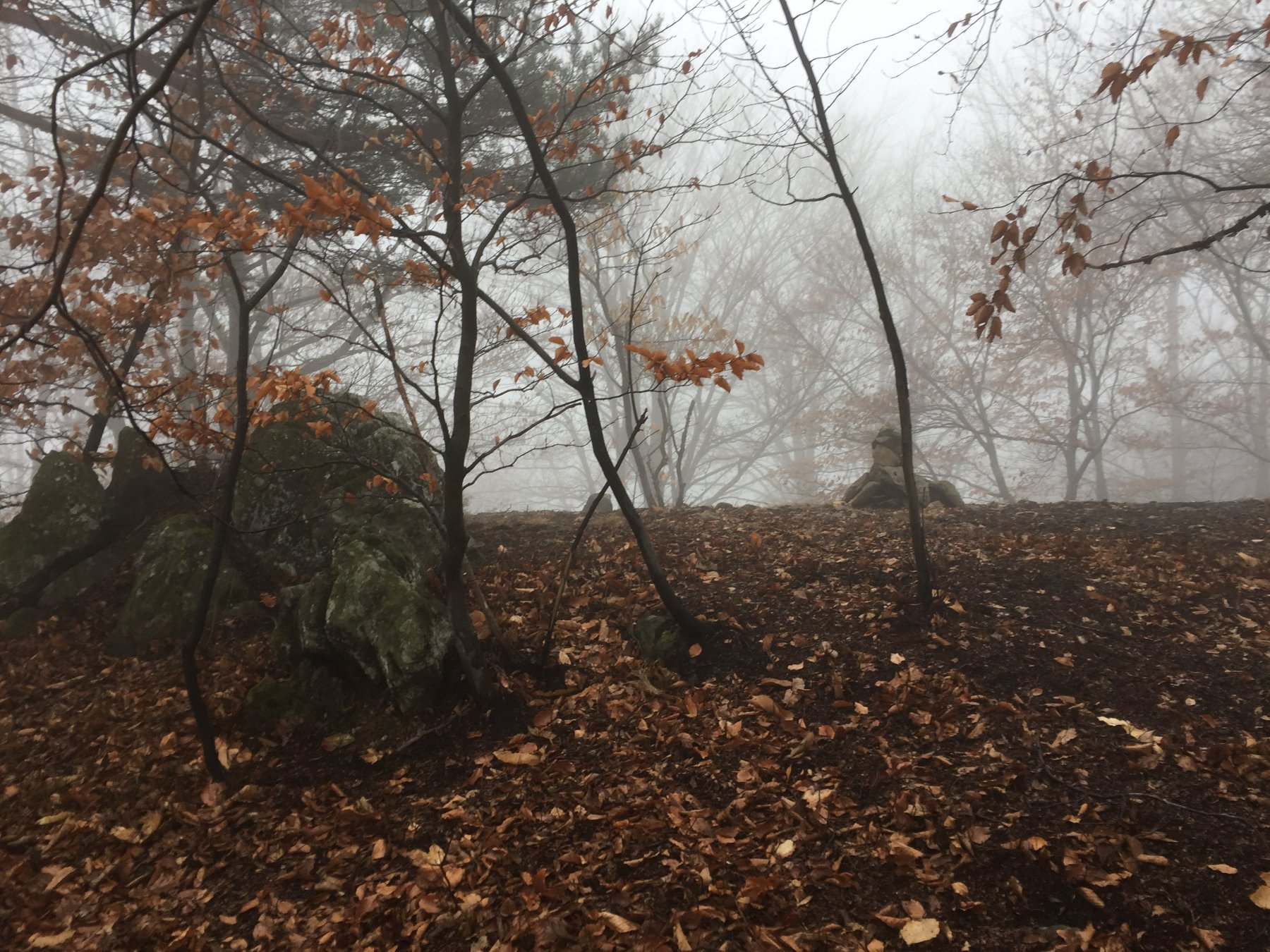 La vetta boscosa