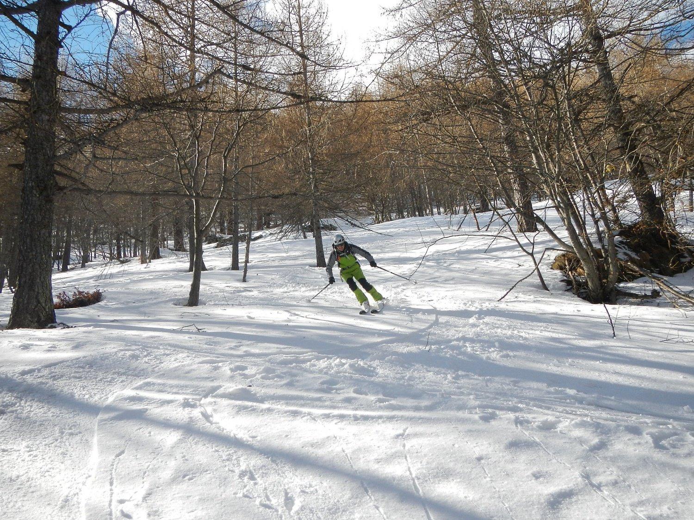 nel bosco su neve divertente