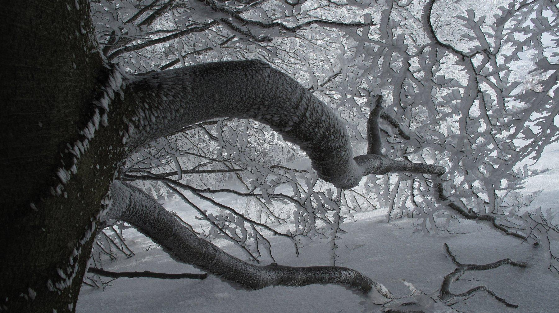 Tronco nel bosco