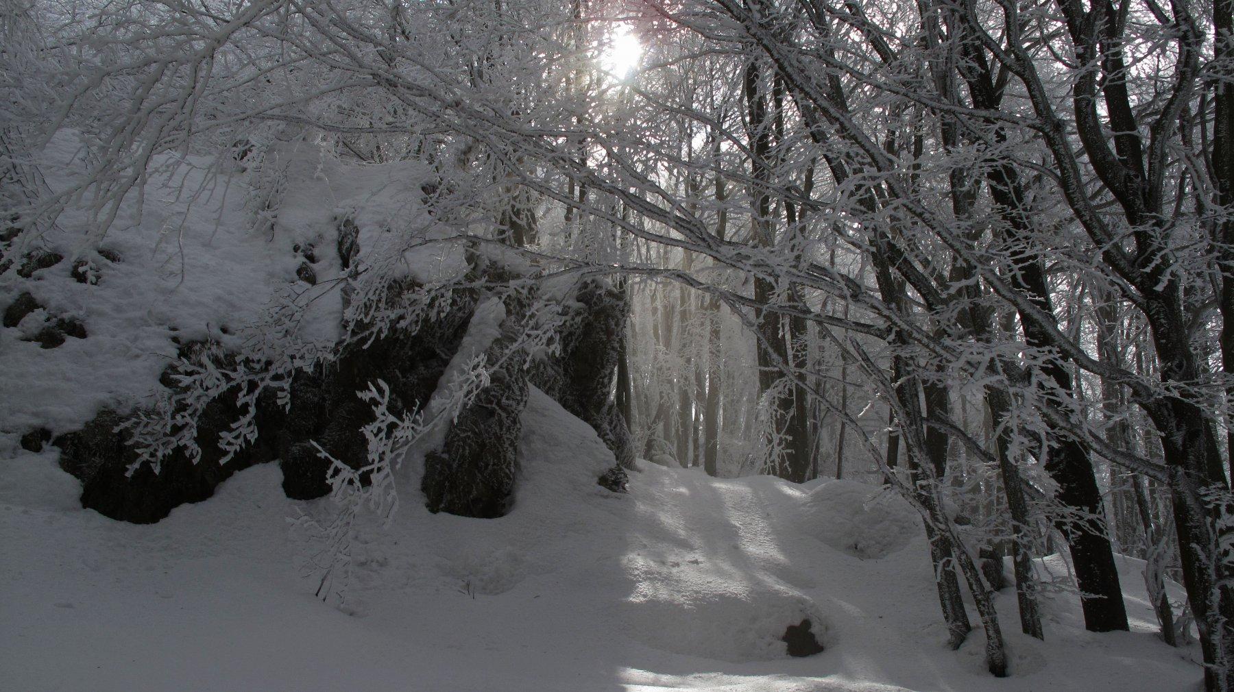 luci bel bosco fiabesco