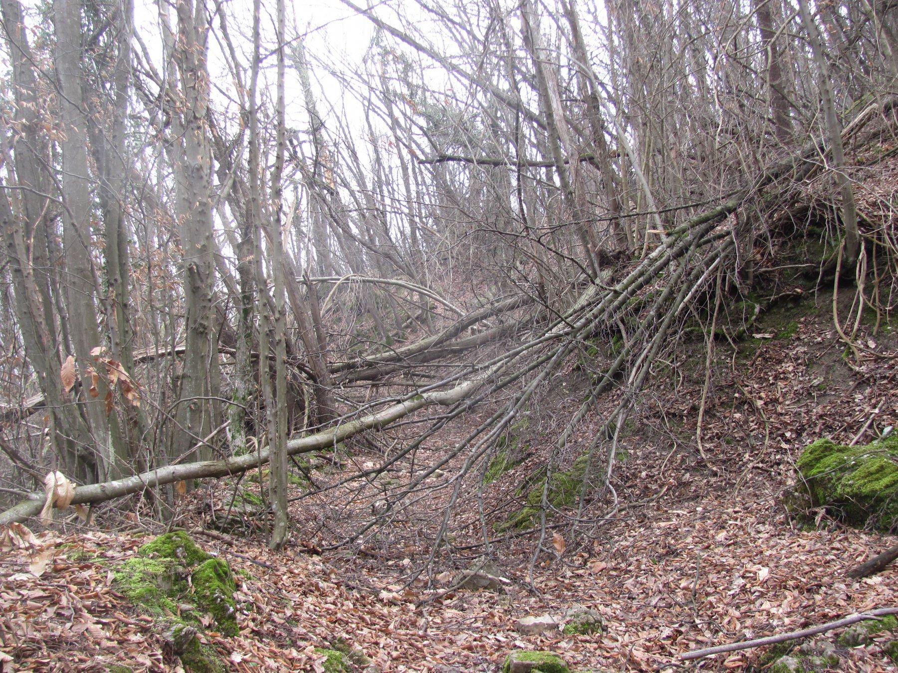 sfacelo di alberi abbattuti nella mulattiera da Vobbietta