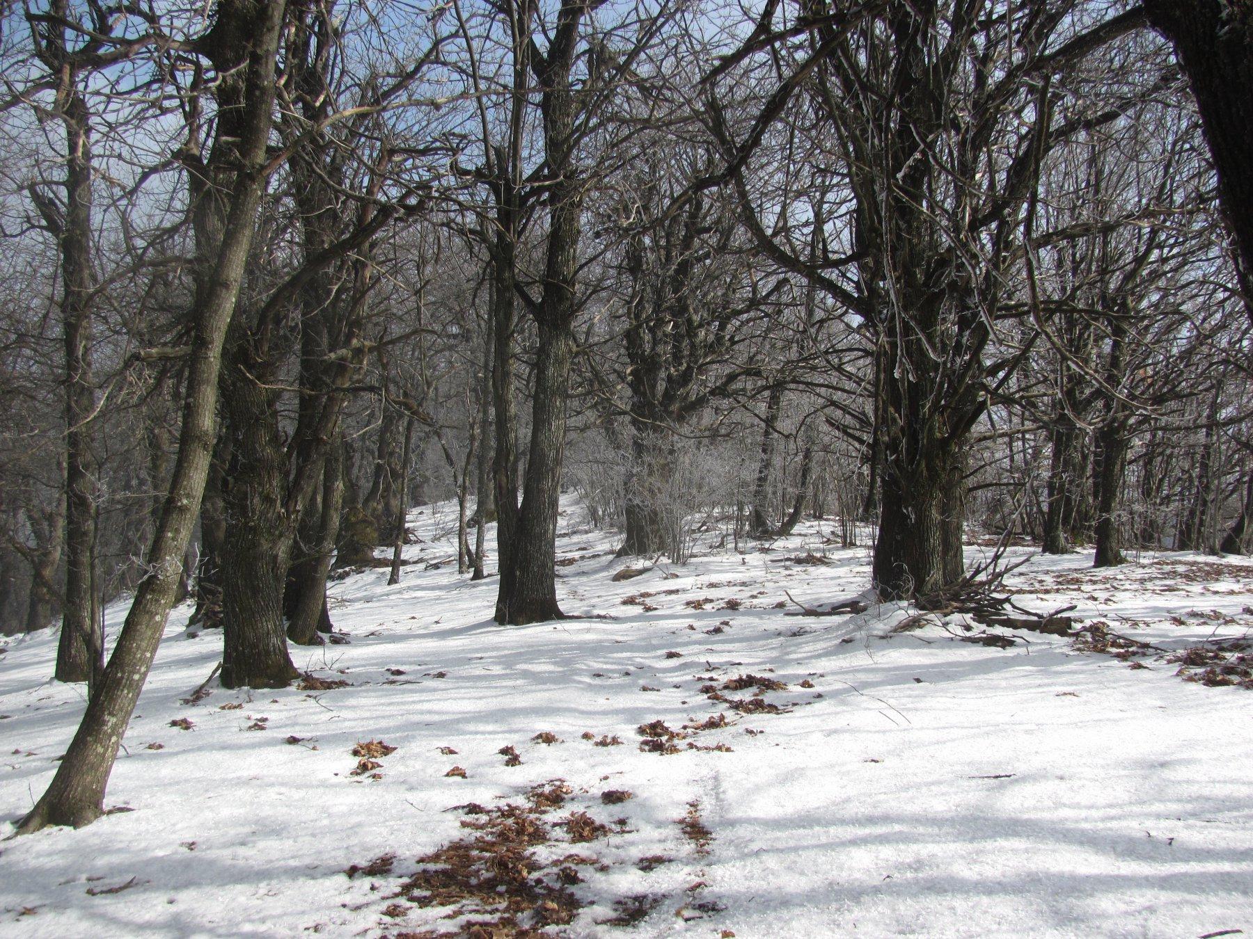 nel bosco è solo accennata una traccia