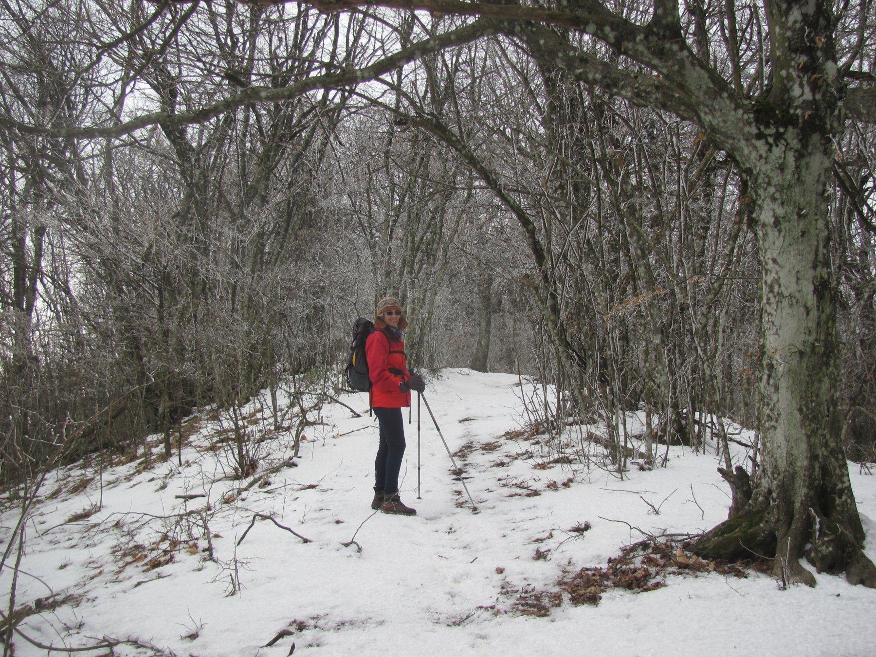 qui il bosco è quasi un viale, con rami imbiancati dalla galaverna