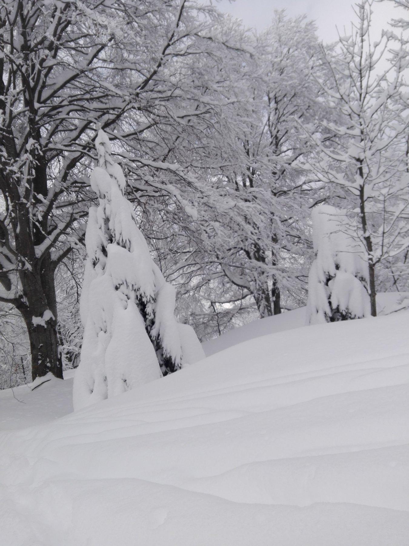 Bosco impupazzato di neve