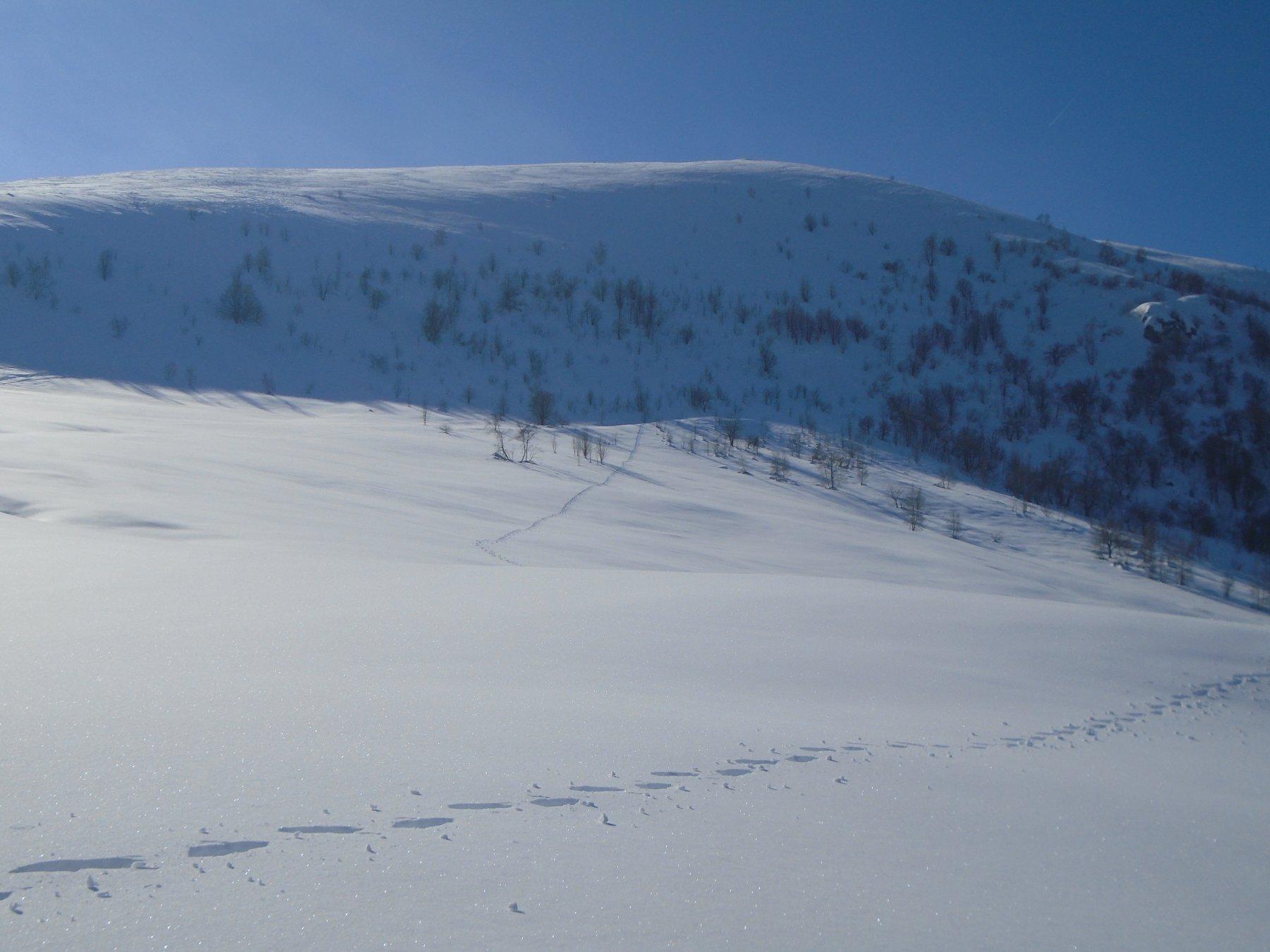 Discesa diretta dall' Alpe