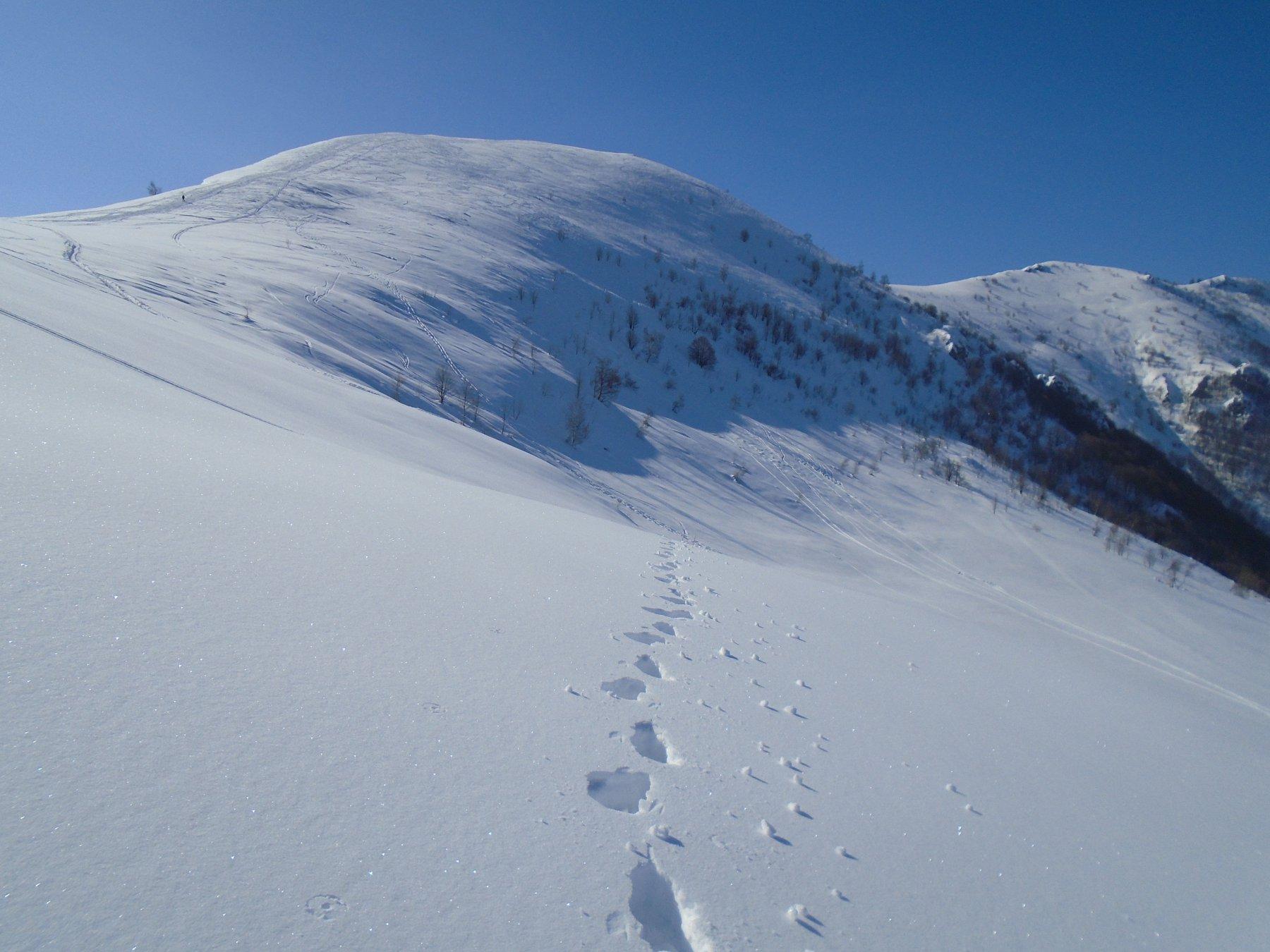 Risalita verso Rocca Stella (sguardo indietro verso l' Alpe)