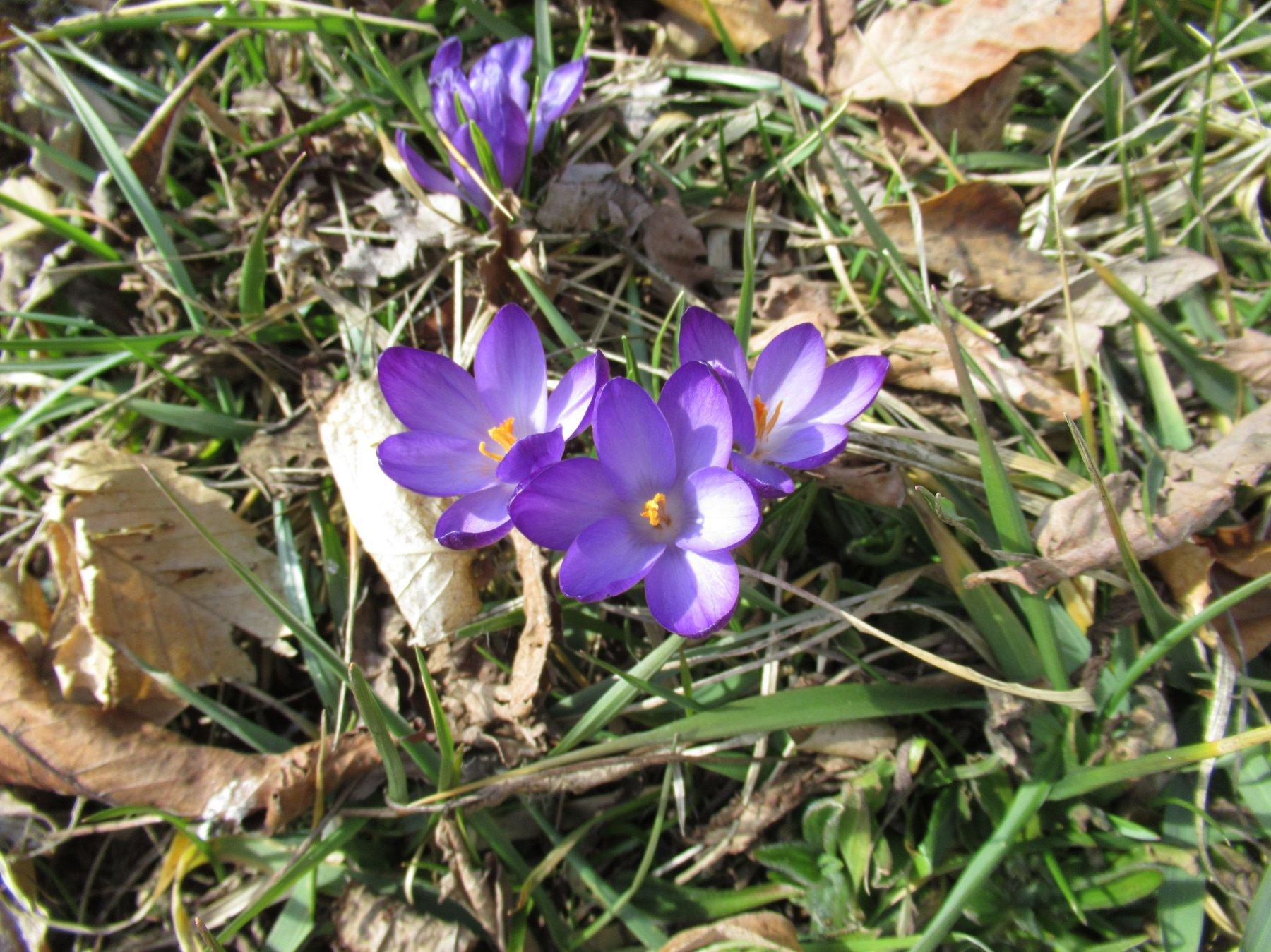 E' primavera ???