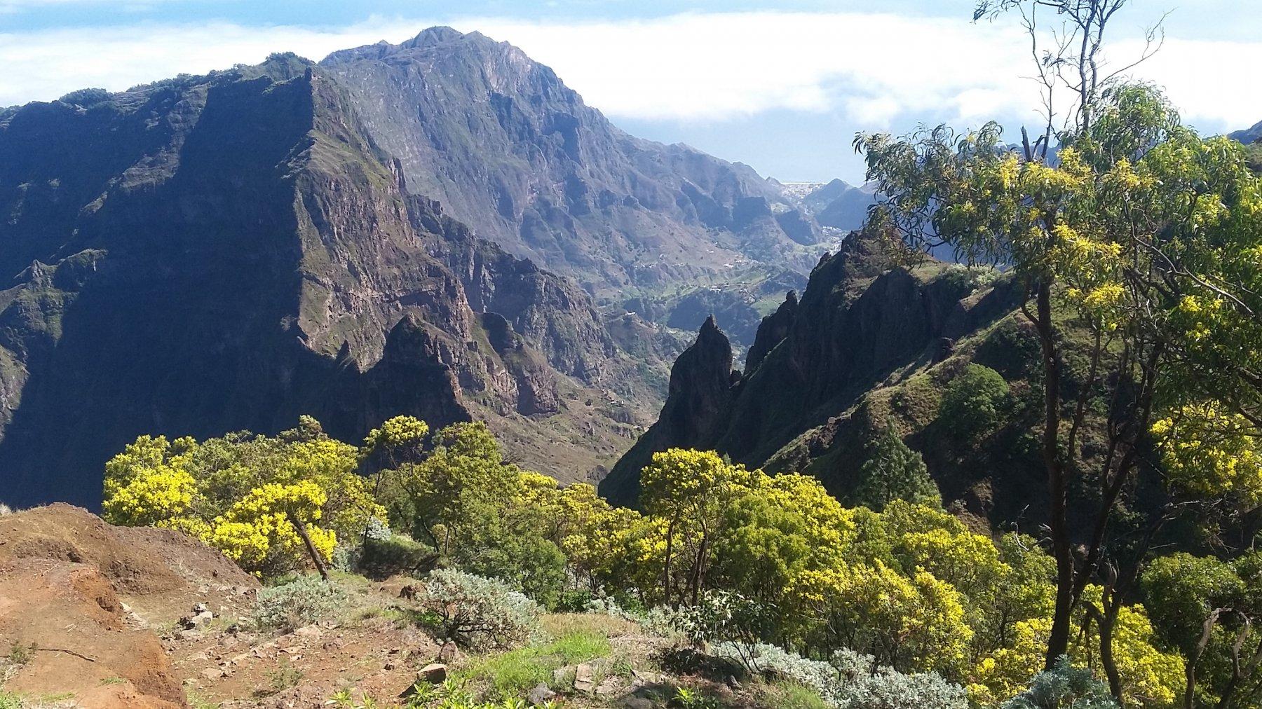 dal punto più alto la Valle di Paul dietro le mimose