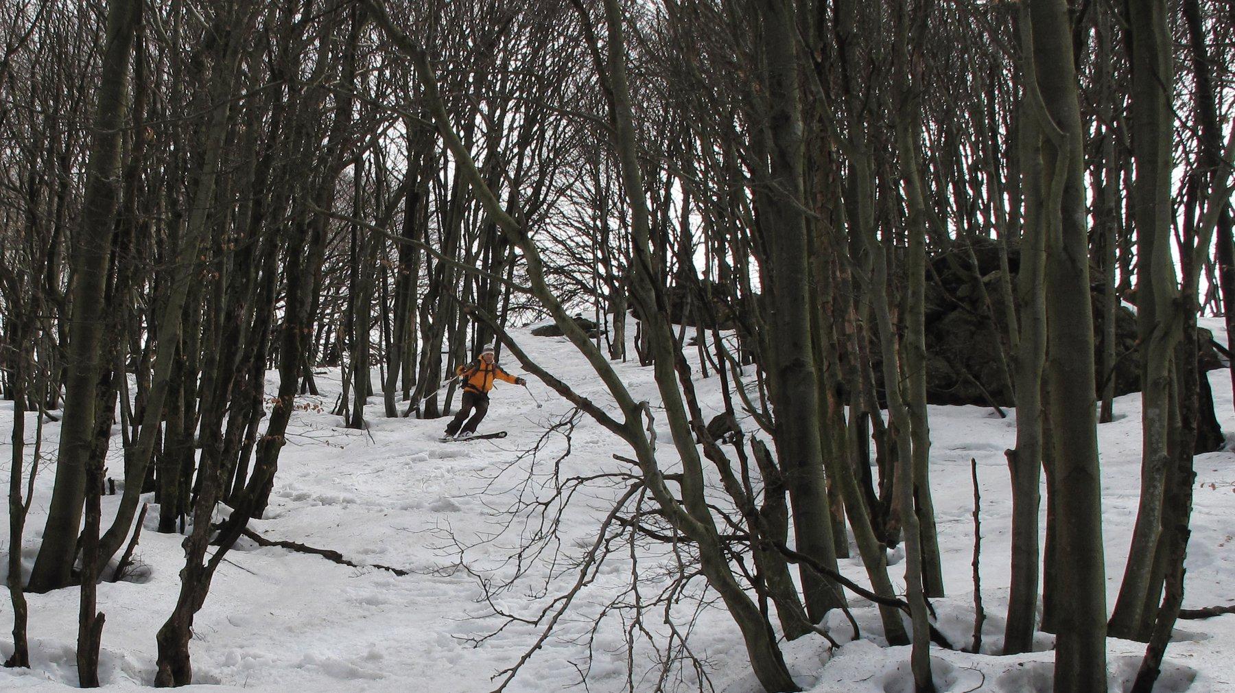 sciando nel bosco