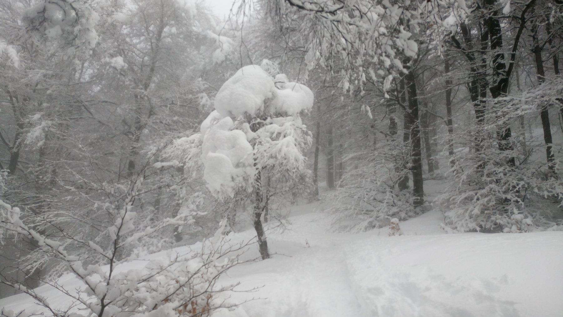 Neve appiccicata sull'albero