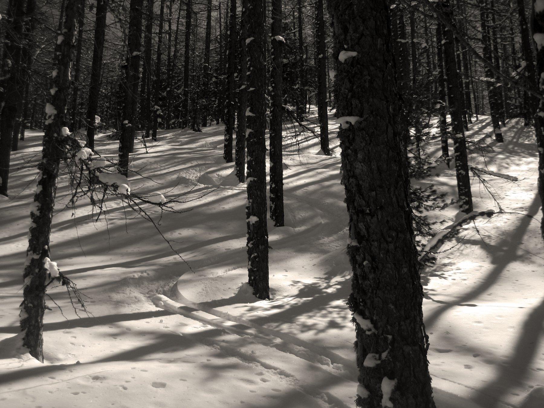 bello anche il bosco