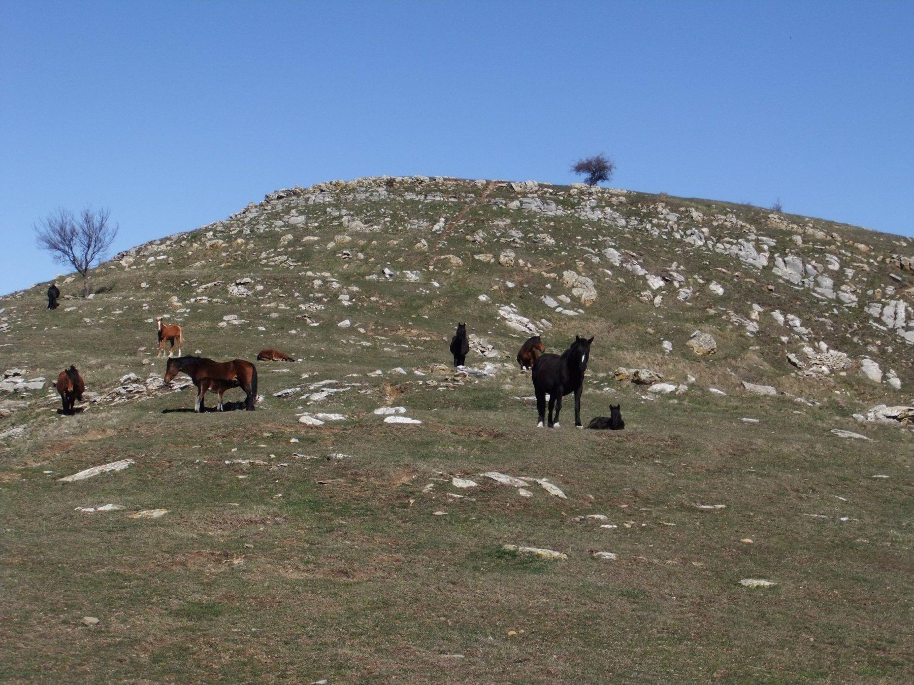 Cavalli sotto al Monte Faudo