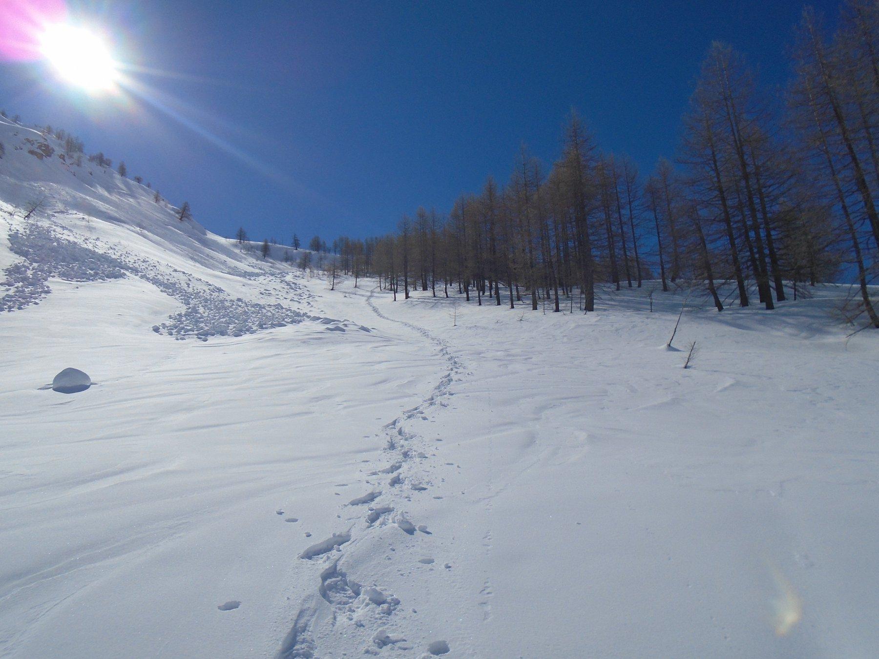 Discesa del pendio dei pini con bella neve