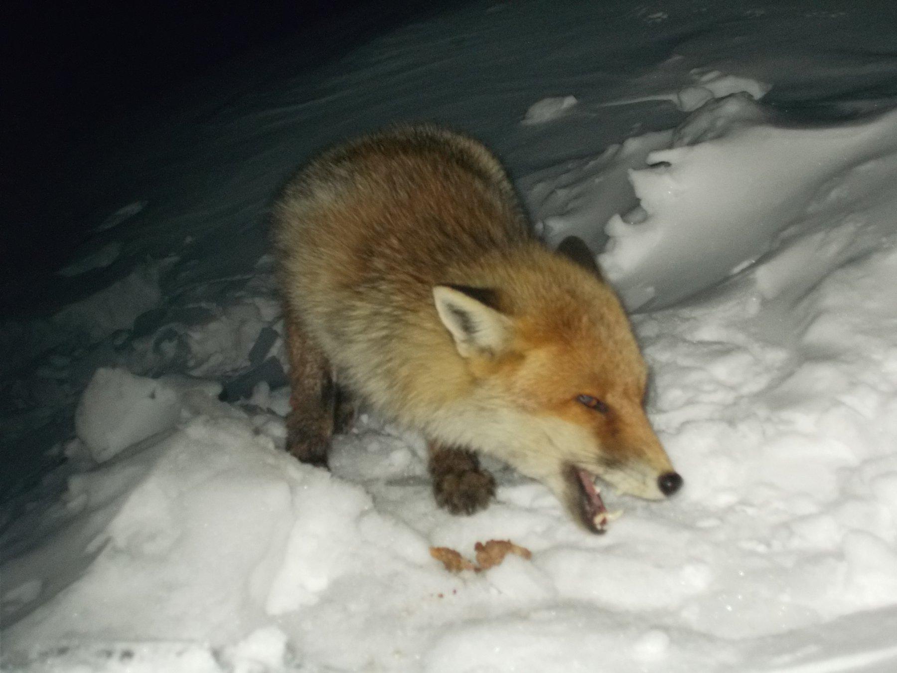 affamata e infreddolita fuori la porta dell'invernale..