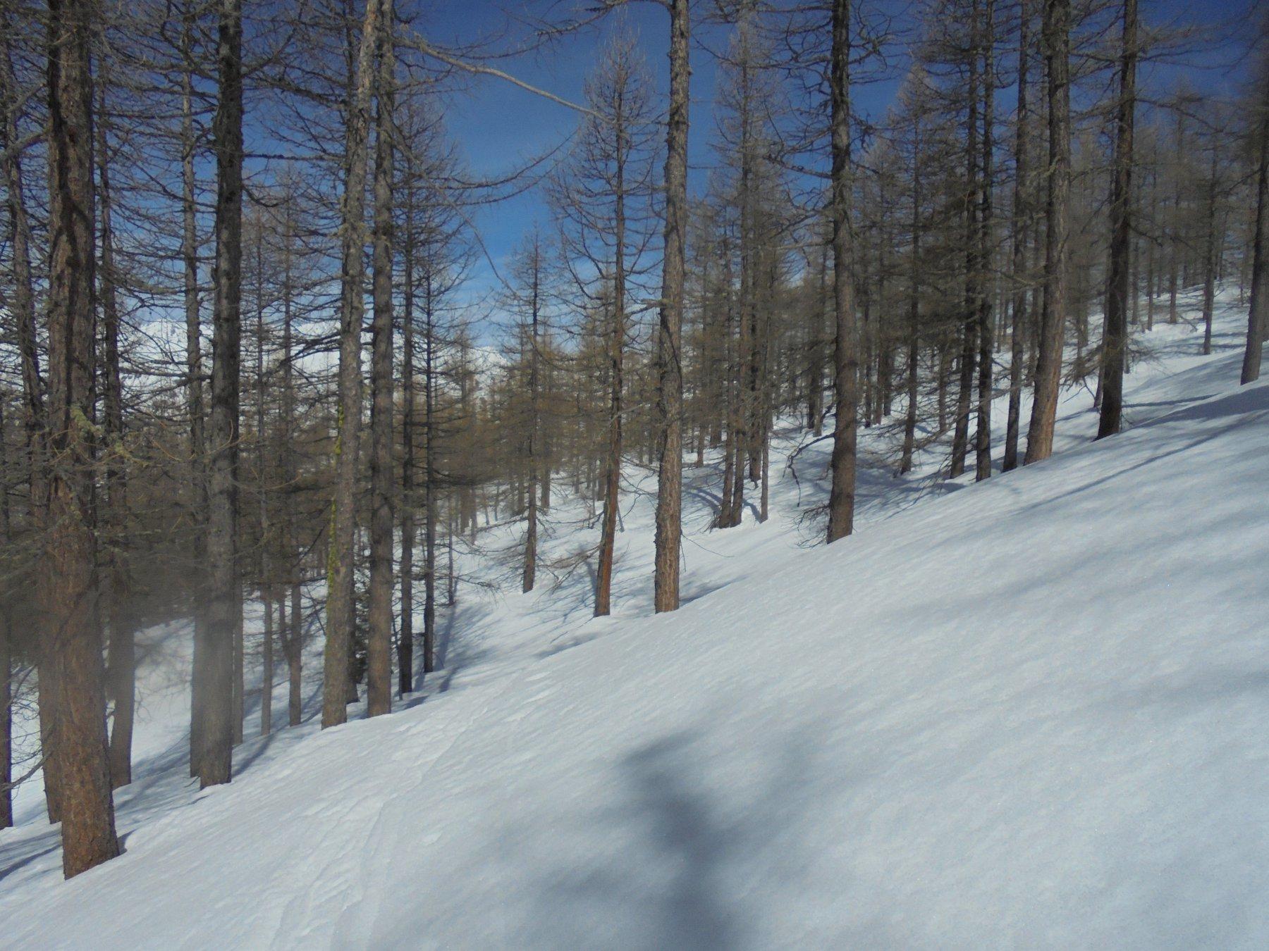 In mezzo al bosco, cercando di raggiungere la traccia corretta