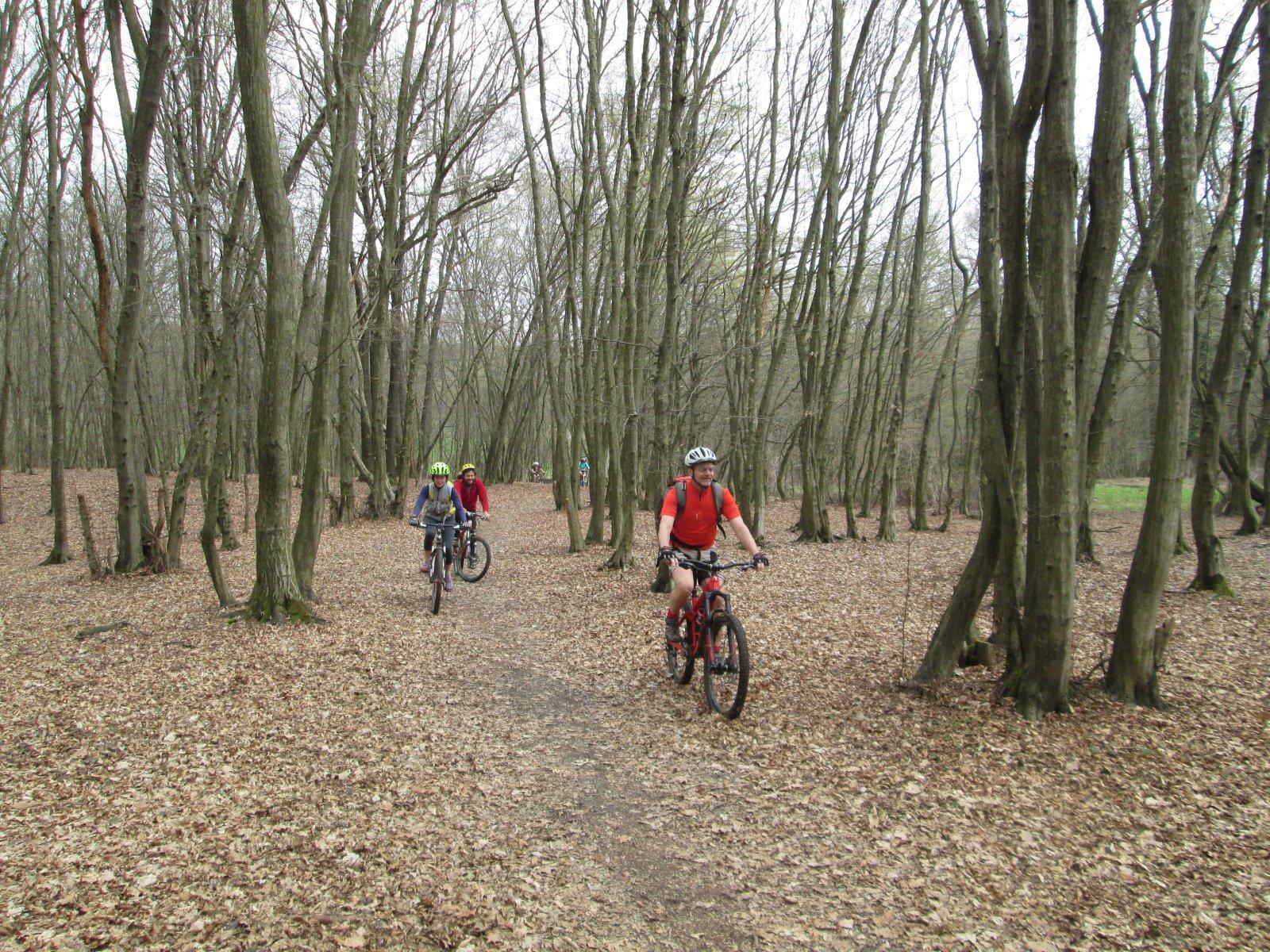 piacevoli sentierini tra i boschi