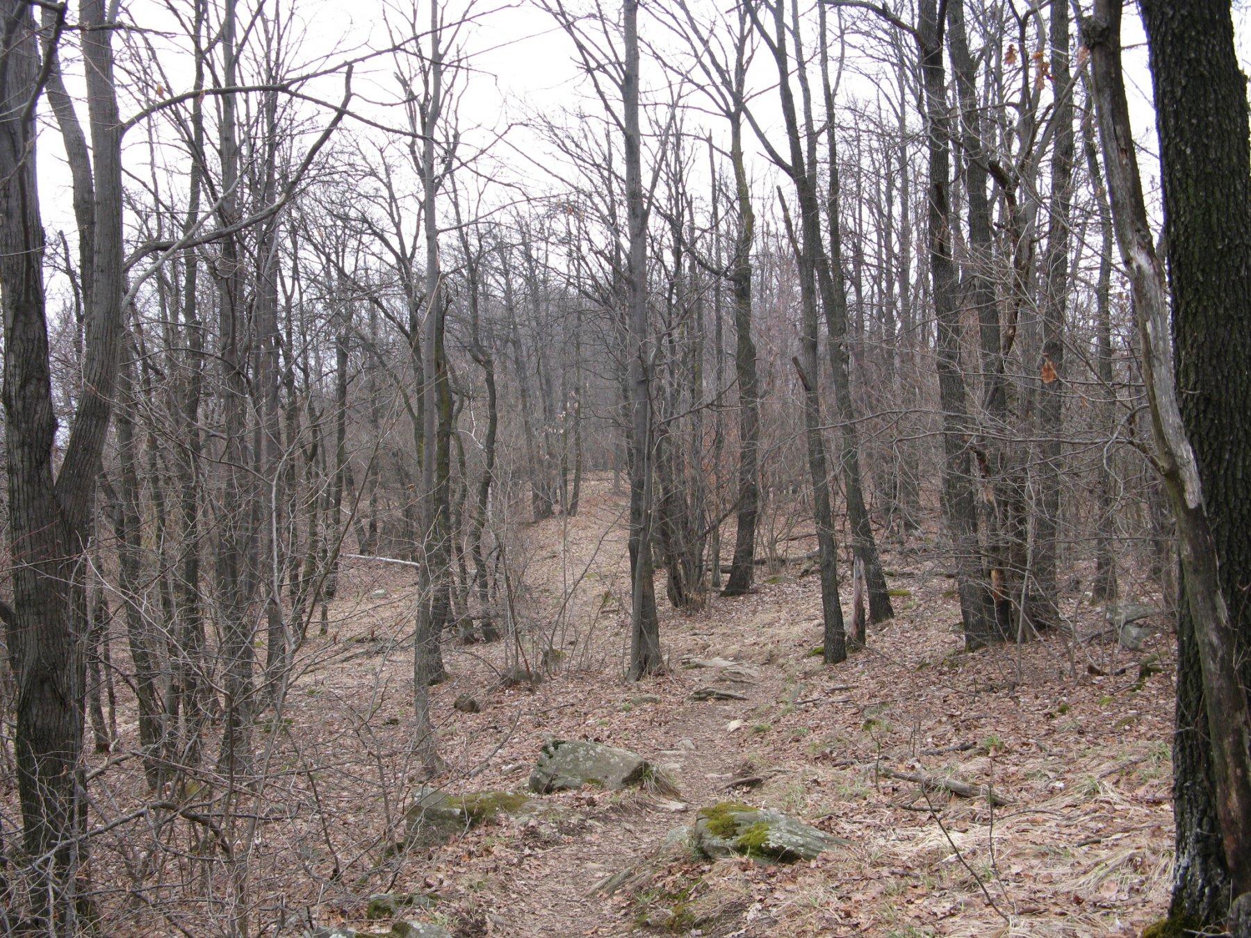 nel bosco poco sopra Pian d'la Feja