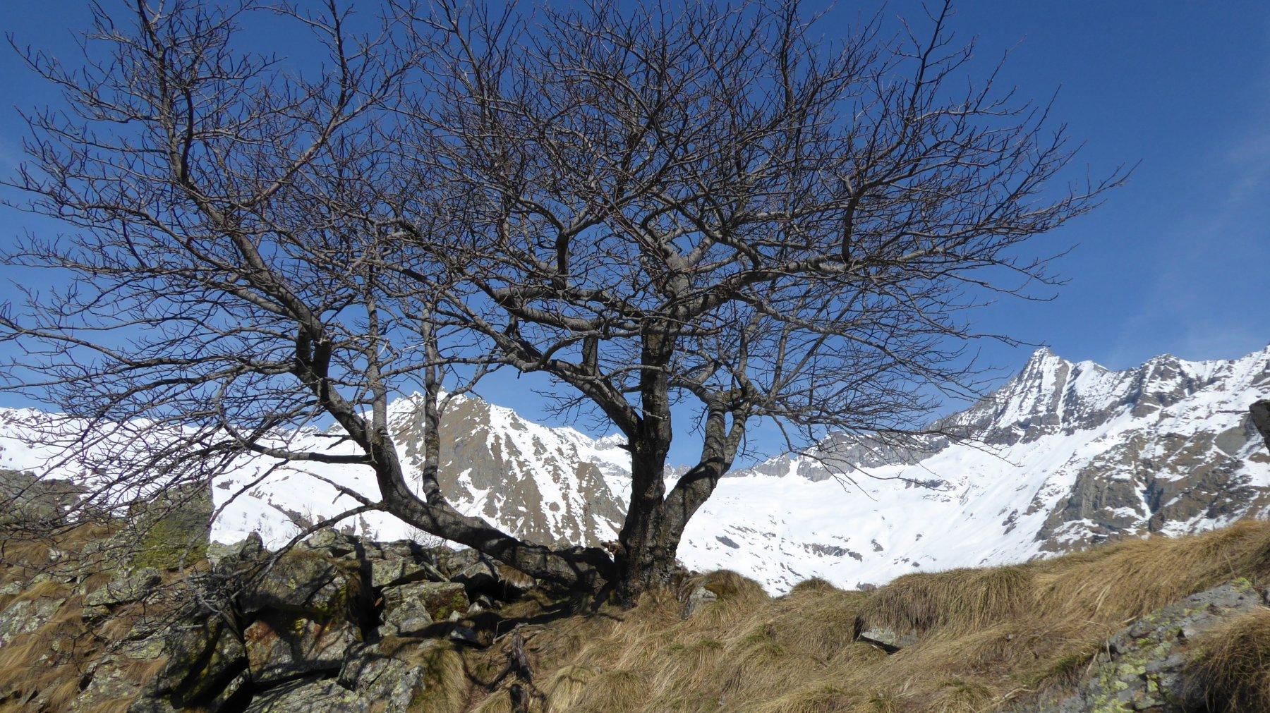 Magnifico Sorbo Montano, che domina la depressione di cresta