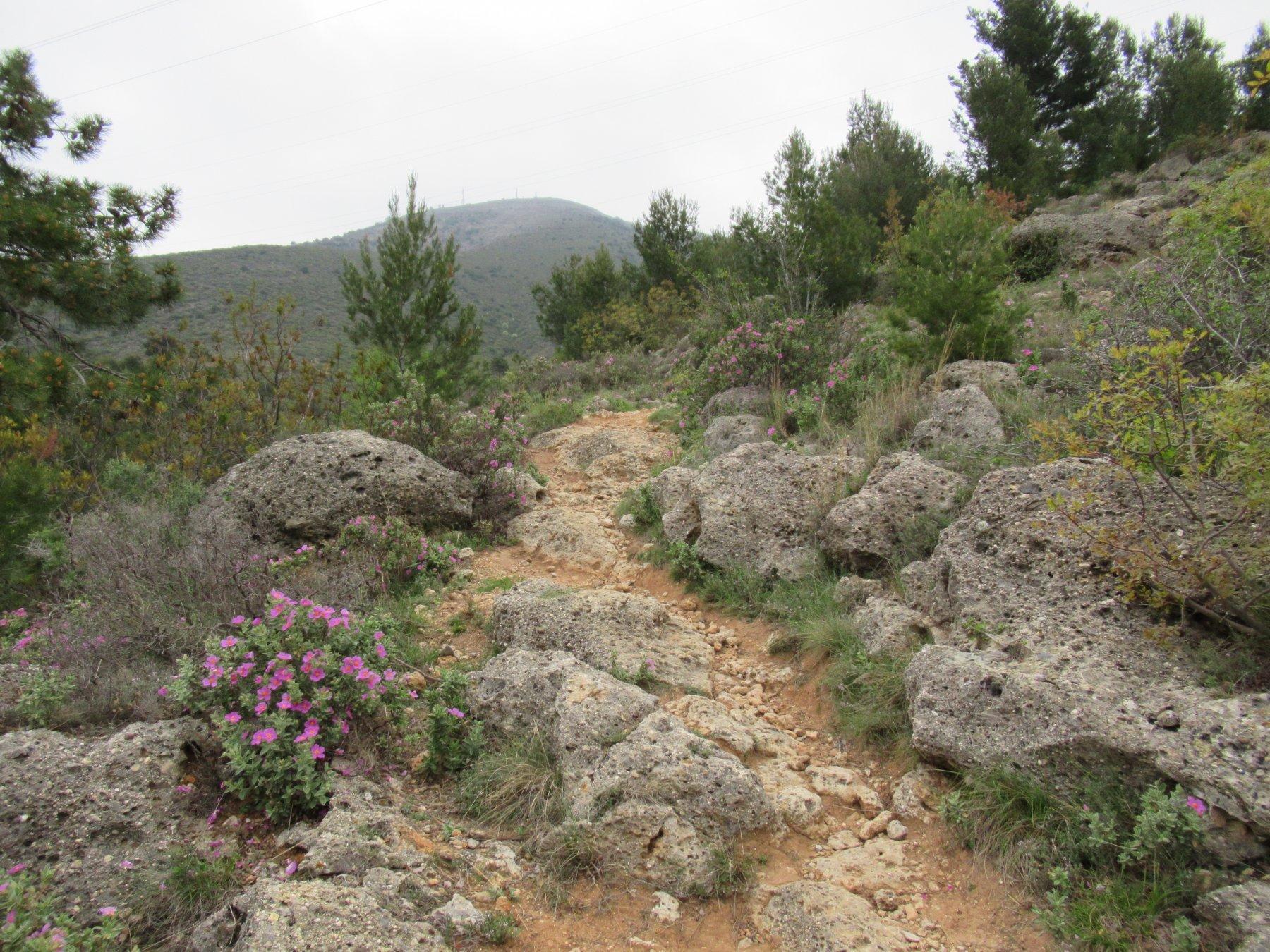 Prima parte di sentiero per il Poggio Ceresa (m.710).
