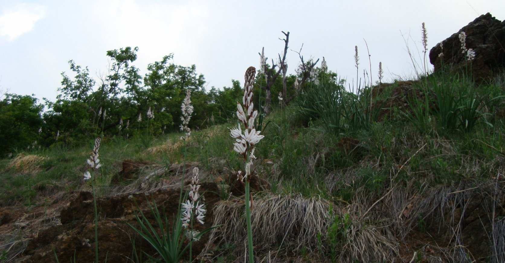 fiorellin del bosco