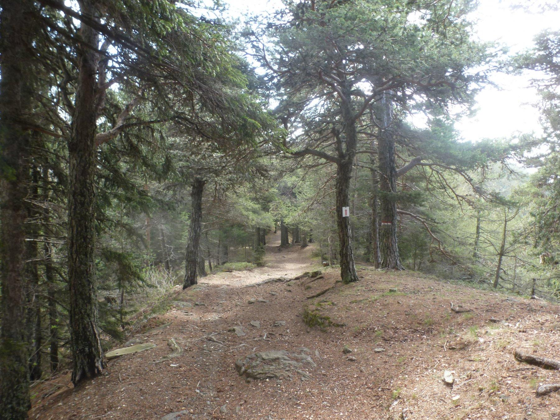 splendido sentiero