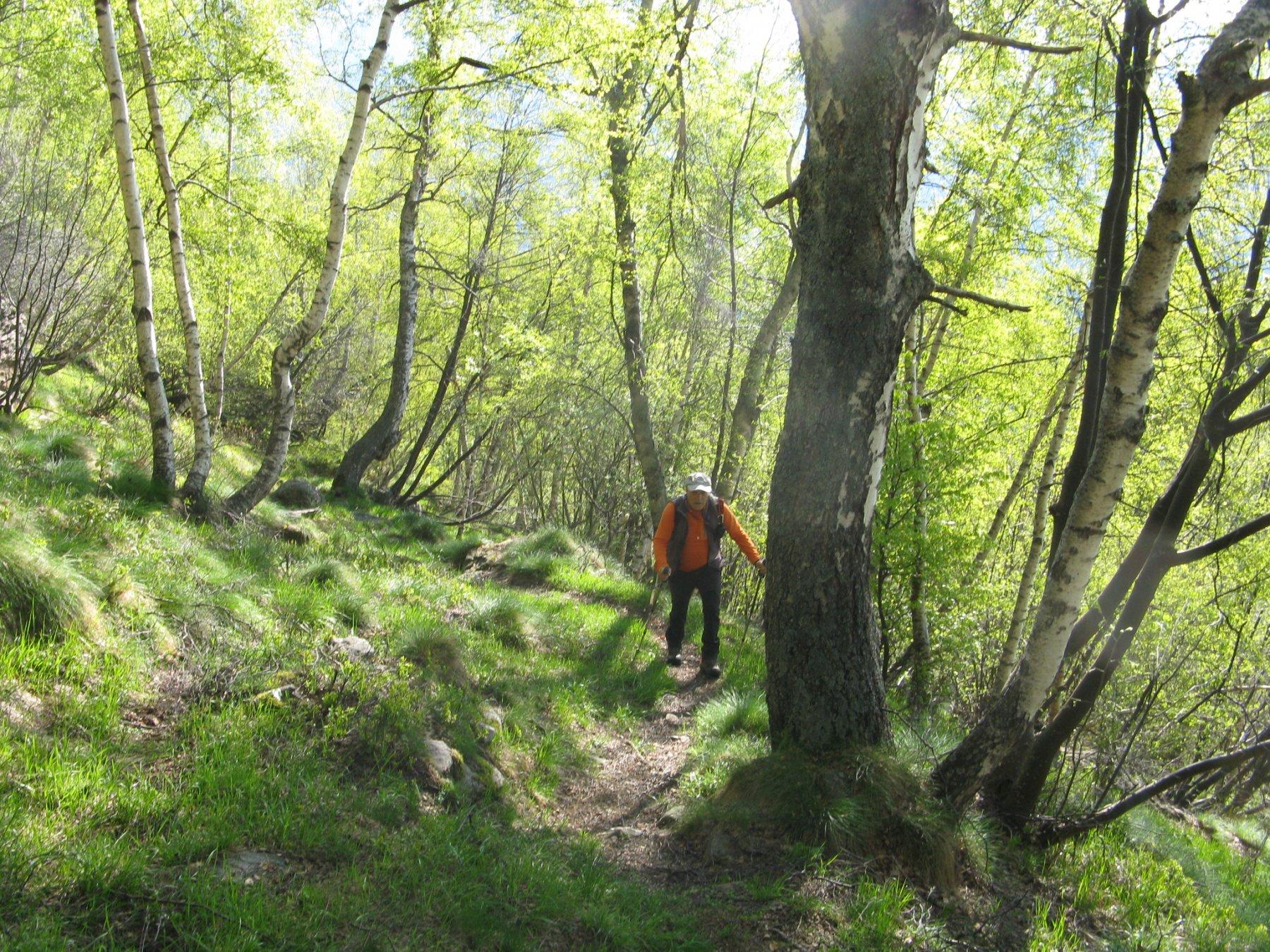 nel bosco nella prima parte del percorso