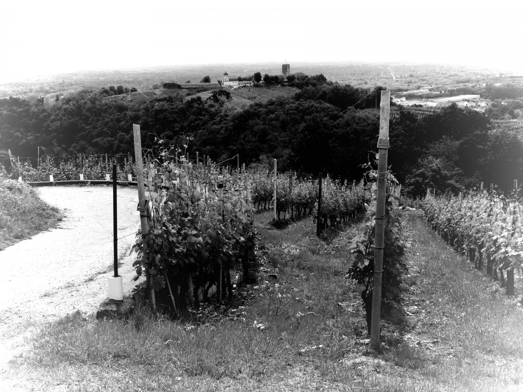 In vista della Torre delle Castelle a Gattinara