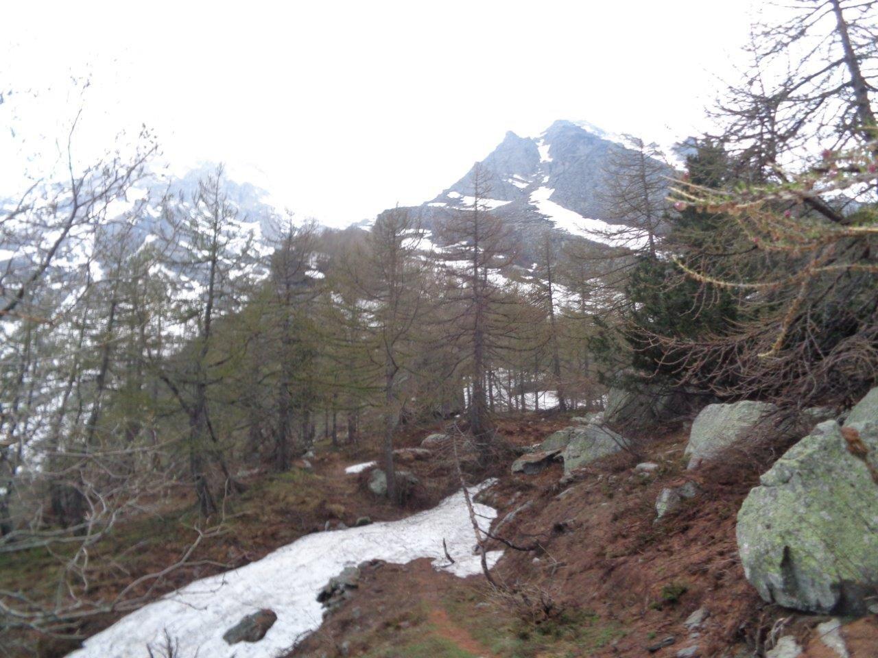tratto iniziale lungo il sentiero estivo e lingue di neve