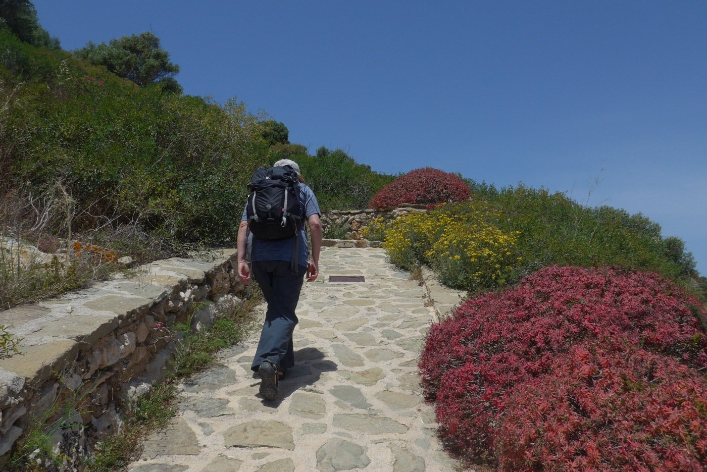 Salendo sul bel sentiero lastricato, fra le euforbie fiorite