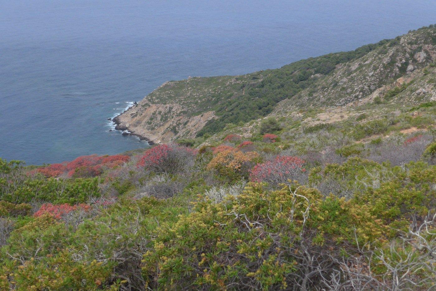 La costa verso Capo Libeccio